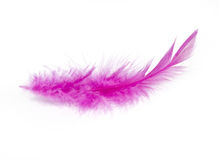 Pink Feather. In soft-focus view Stock Photo