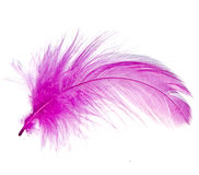 Pink Feather Stock Images