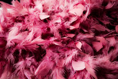 Pink feather Royalty Free Stock Photos