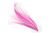 Pink feather. Close up of a pink feather isolated over white background