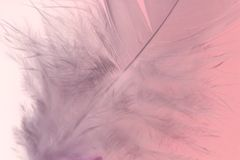 Pink feather Stock Photos