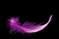 Pink feather Stock Photo