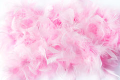Pink feather boa Stock Images