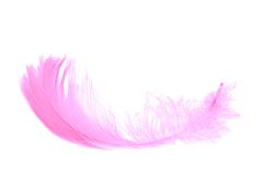 Pink feather isolated on white Stock Photography