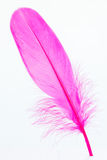 Pink feather standing on foam close-up Royalty Free Stock Photo
