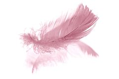 Pink feather on white Royalty Free Stock Photos