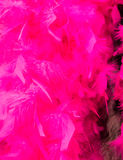 Pink Feathered Background Royalty Free Stock Photography