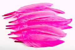 Pink feathers Stock Photos