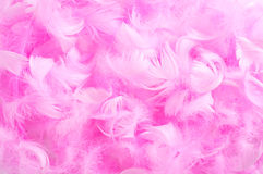 Pink feathers. Closeup of a pile of soft pink feathers Royalty Free Stock Photography