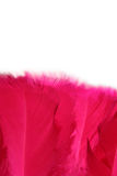 Feathers. Crimson, pink feathers isolated on white background Stock Photos