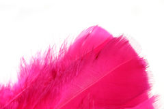 Pink feathers. Crimson, pink feathers шsolated on white Royalty Free Stock Photo