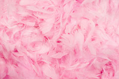 Pink feathers background. Soft and gentle theme - pink feathers background