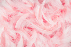 Pink feathers background Stock Image