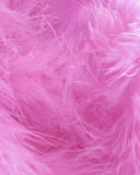 Pink Feathers Background -  Stock photos Royalty Free Stock Photos