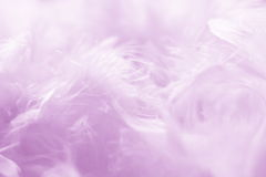 Pink Feathers Background -  Stock photos Royalty Free Stock Images