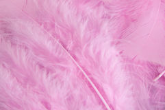 Pink feathers background Royalty Free Stock Photography