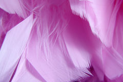 Pink feathers closeup background Stock Photo
