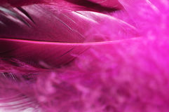 Pink Feathers Royalty Free Stock Photos