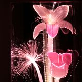 Pink Fiber Optic Flowers Stock Images