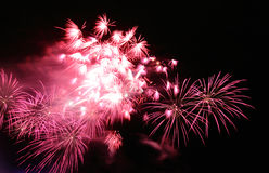 Pink Fireworks Stock Image