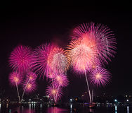Pink fireworks Stock Images