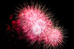 Pink fireworks display on dark sky background. Royalty Free Stock Images