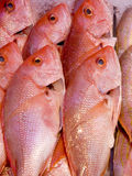 Pink Fish Royalty Free Stock Image