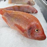 Pink fish on ice ready to shop in super market Stock Images