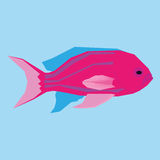Pink Fish Isolated On Blue Background. Vector Pink Fish Isolated On Blue Background Royalty Free Stock Photo