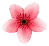 A pink five-petal flower Stock Image