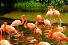 Free Pink Flamingo Royalty Free Stock Photos - 12846228