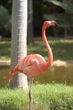 Pink flamingo. At the zoo royalty free stock photos