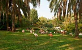 Pink Flamingo Royalty Free Stock Images