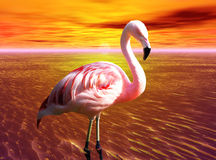 Pink Flamingo. A photo of a pink flamingo Stock Photo