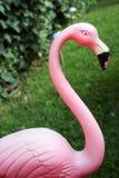 Pink Flamingo. Medium shot of worn out Pink flamingo on green lawn Stock Images