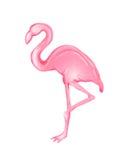 Pink Flamingo. Illustration of Pink Flamingo standing on one leg royalty free illustration