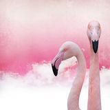 Pink flamingo background. On old paper Royalty Free Stock Photo