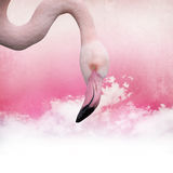 Pink flamingo background Stock Image