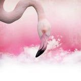 Pink flamingo background stock image