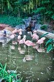 Pink flamingo bird bathing in the sun. Pink flamingo bird bathing in the  sun Royalty Free Stock Image