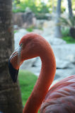 Pink Flamingo Bird. On a green grass stock photography
