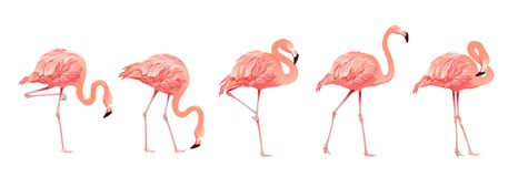 Pink Flamingo Bird Set Tropical Wild Beautiful Exotic Symbol Flat Design Style Isolated on White Background. Vector