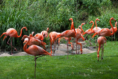 Pink flamingo birds Stock Photos