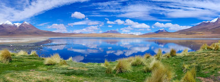 Pink flamingo in  Bolivia.  Panorama Stock Images