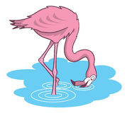 Pink flamingo cartoon illustration Royalty Free Stock Images