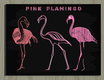 Pink flamingo on chalk board Royalty Free Stock Images