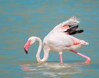 Pink flamingo close up Stock Images