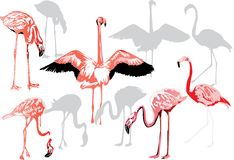 Pink flamingo collection on white Royalty Free Stock Photo