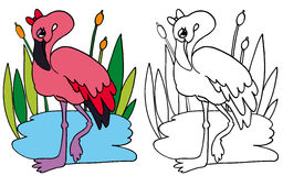Pink Flamingo COLOR and BW Royalty Free Stock Photography