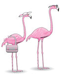 Pink Flamingo Couple Stock Photos